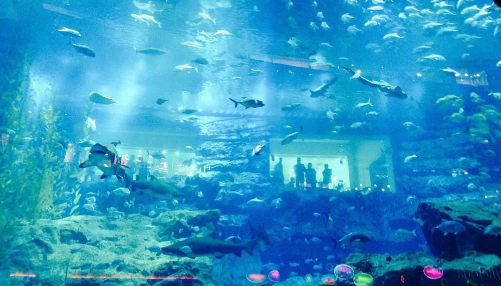 Dubai Aquarium and Underwater Zoo top 10 attractions in Dubai
