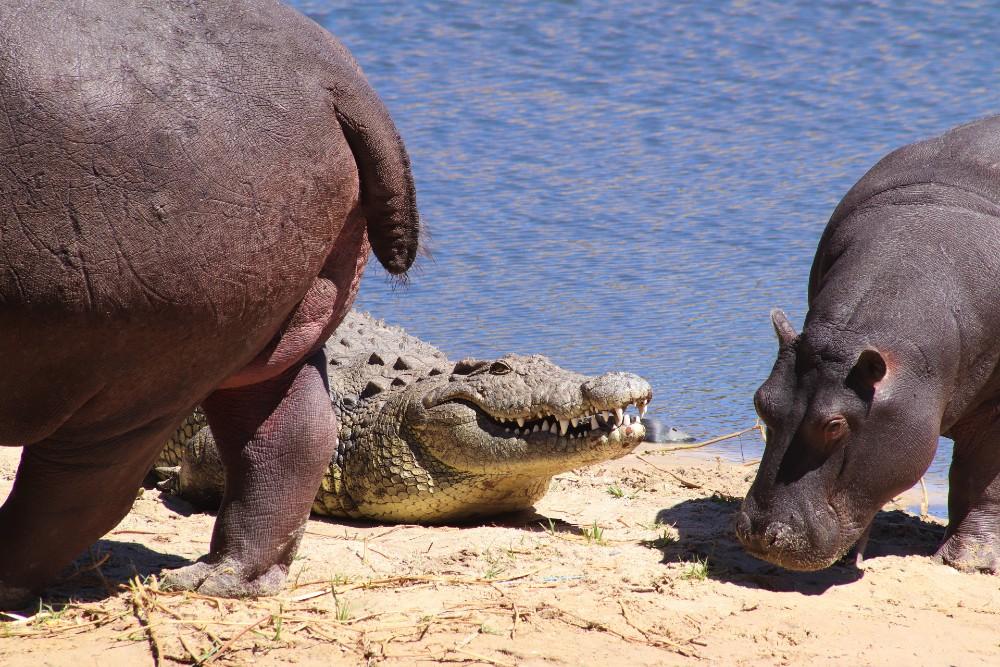 Kaziranga National Park in Assam wildlife places in India