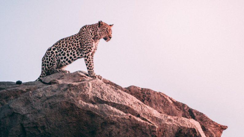 wildlife places in India