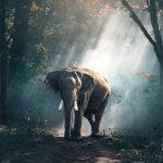 world's best wildlife sanctuaries