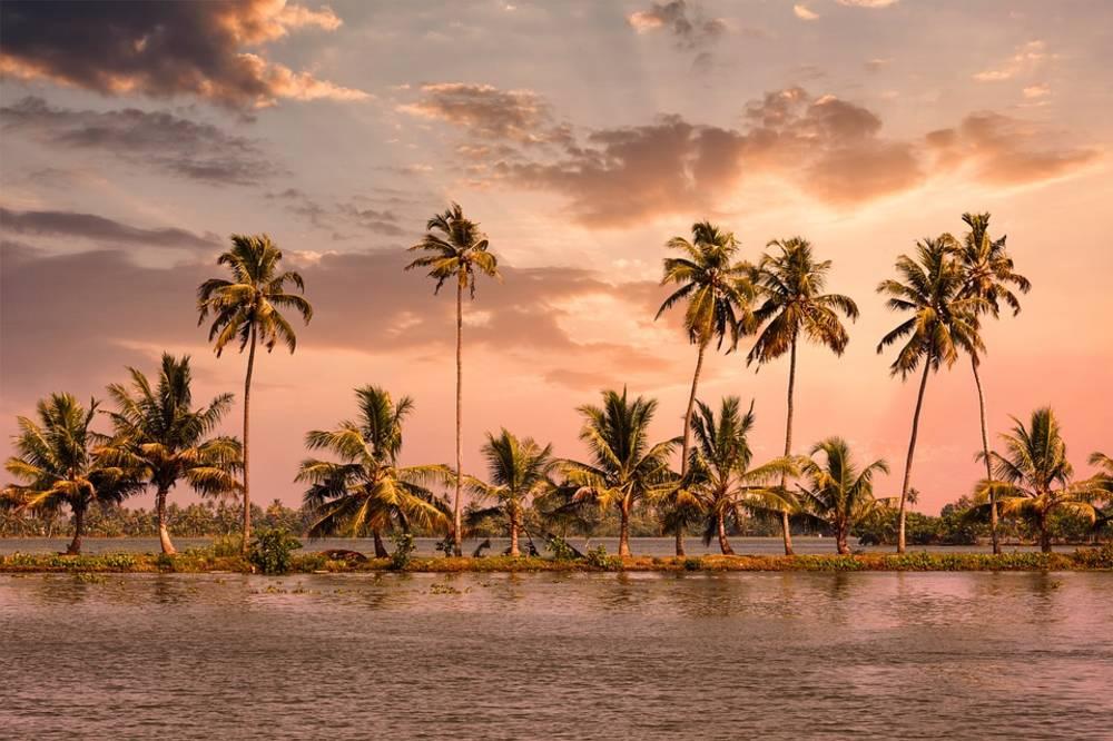 Kumarakom, Palm Trees, water, River, Kerala