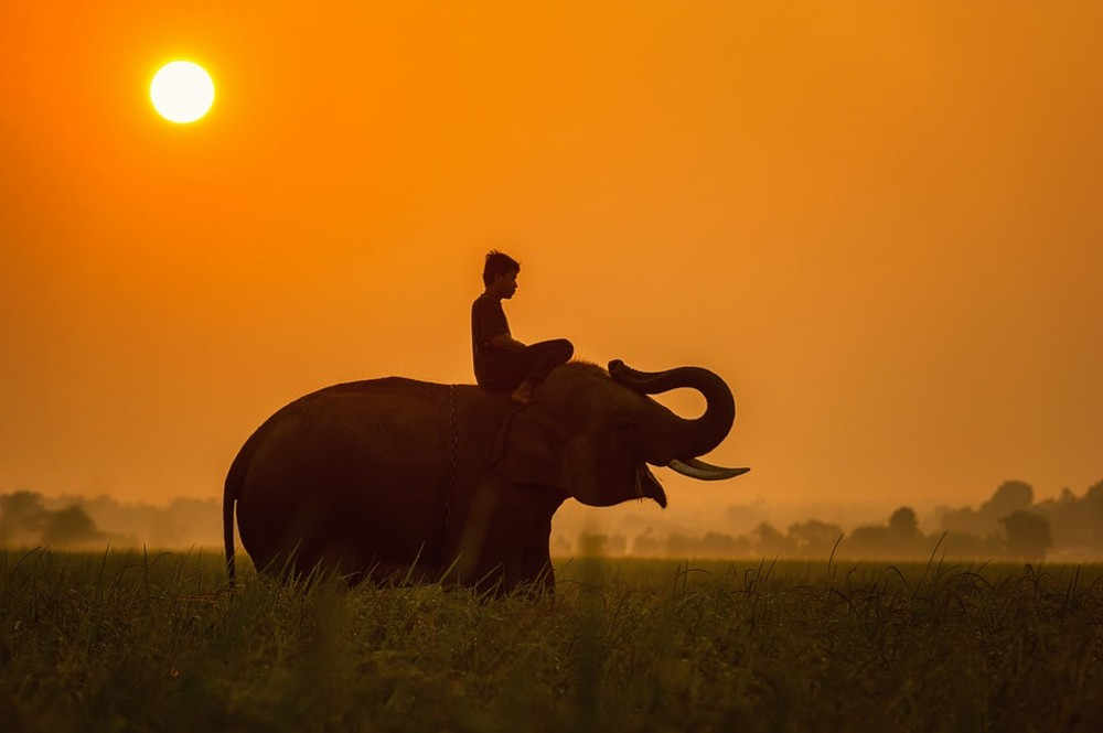 man on elephant, sunset, Cambodia