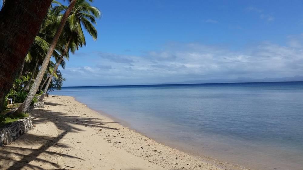 sea, trees, beach