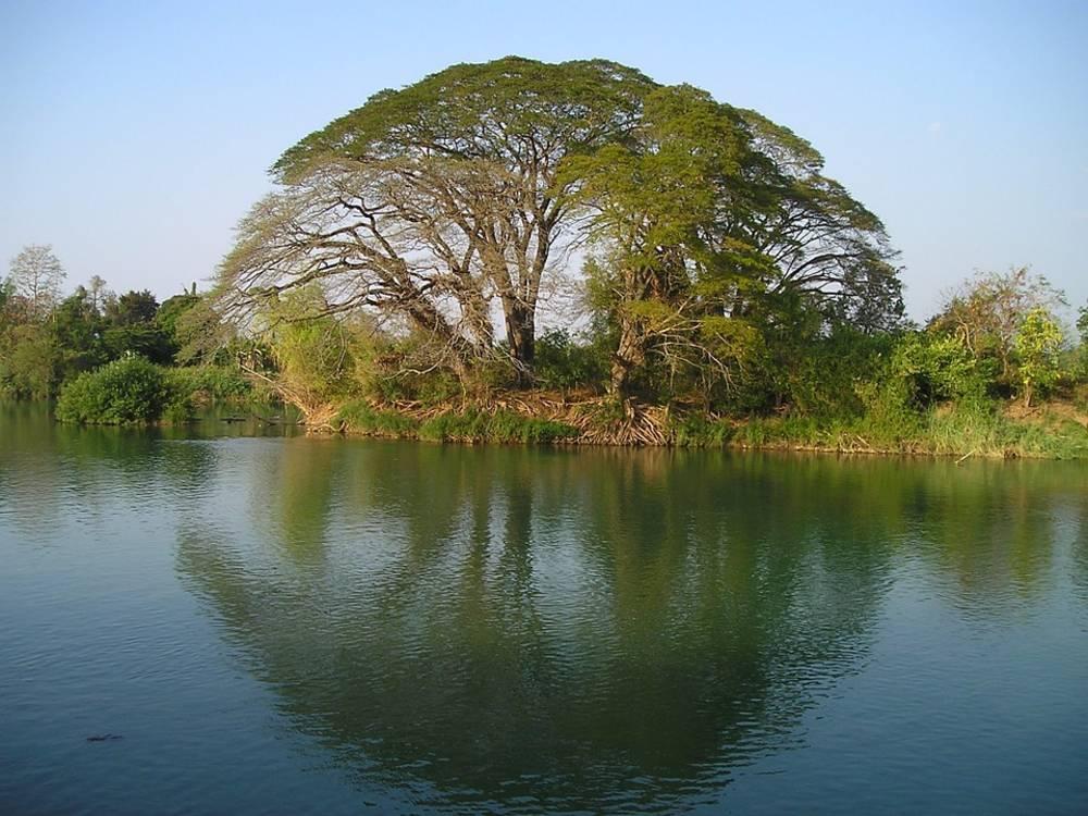 Laos. tree, water, river