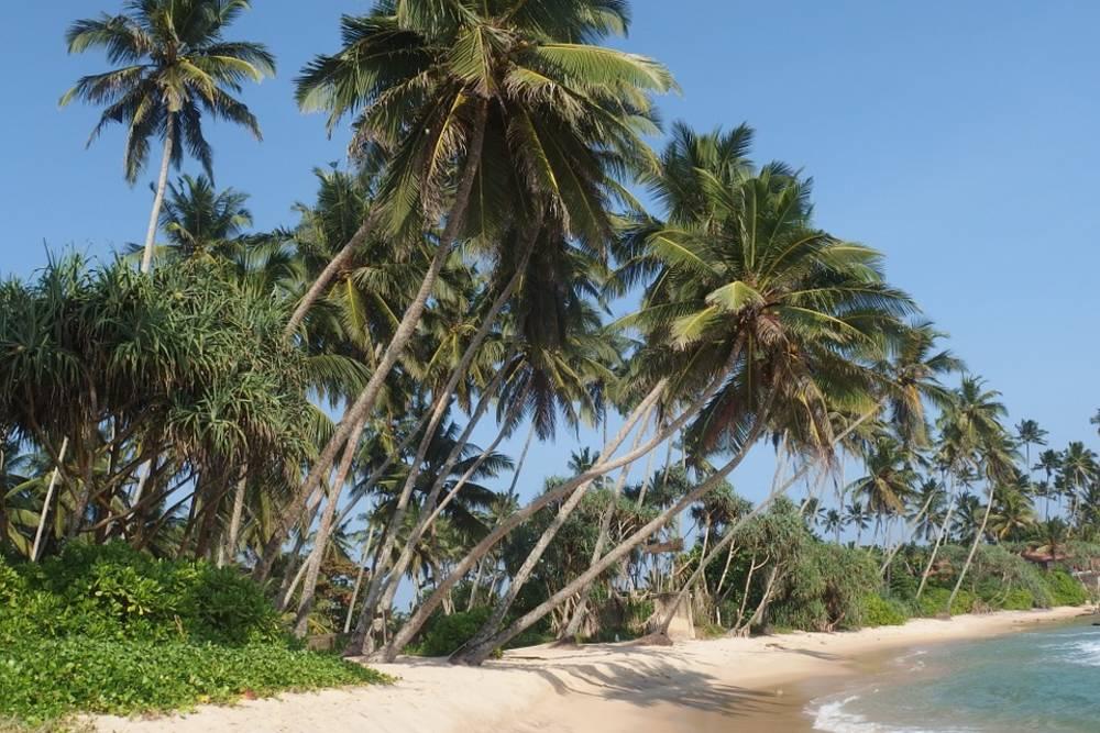 Sri Lanka, trees, beach, sea, water, island
